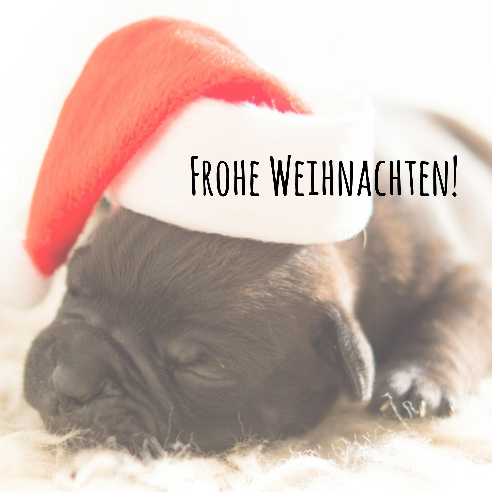 Frohe Weihnachten Hund