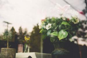 Blume am Fenster