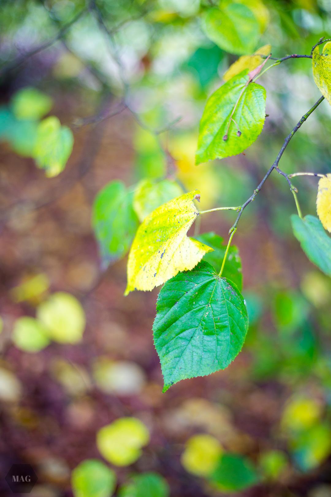 nachhaltigkeit, nachhaltig, was ist eigentlich nachhaltigkeit, grün leben, eco lifeystyle