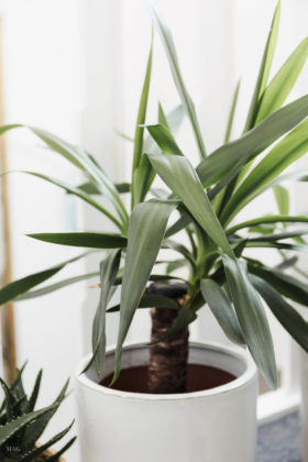 urban jungle, pflanzen zuhause, pflanzen für Anfänger, pflanzen Anfänger pflege, pflanzen kaufen nachhaltig, pflanzen online kaufen, pflanzen pflegen Anfänger, schwarzer Daumen Zimmerpflanzen, Zimmerpflanzen Anfänger, urban jungle bloggers