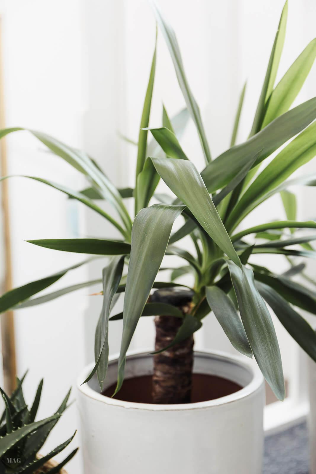 mein urban jungle pflanzen f r den schwarzen daumen bezugsquellen und gr nzeug impressionen. Black Bedroom Furniture Sets. Home Design Ideas