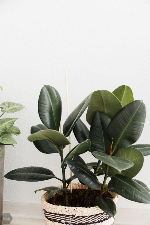 Mein Urban Jungle: Pflanzen für den schwarzen Daumen, Bezugsquellen und Grünzeug-Impressionen