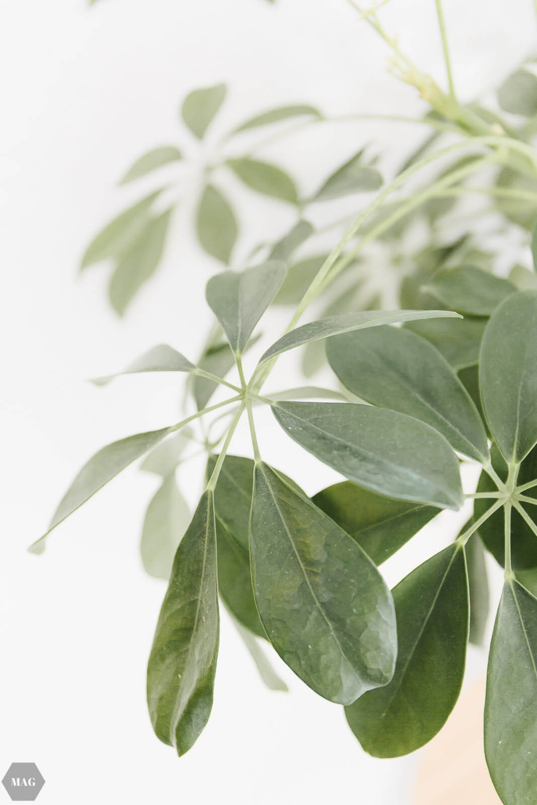 Mein Urban Jungle: Pflanzen für den schwarzen Daumen, Bezugsquellen ...