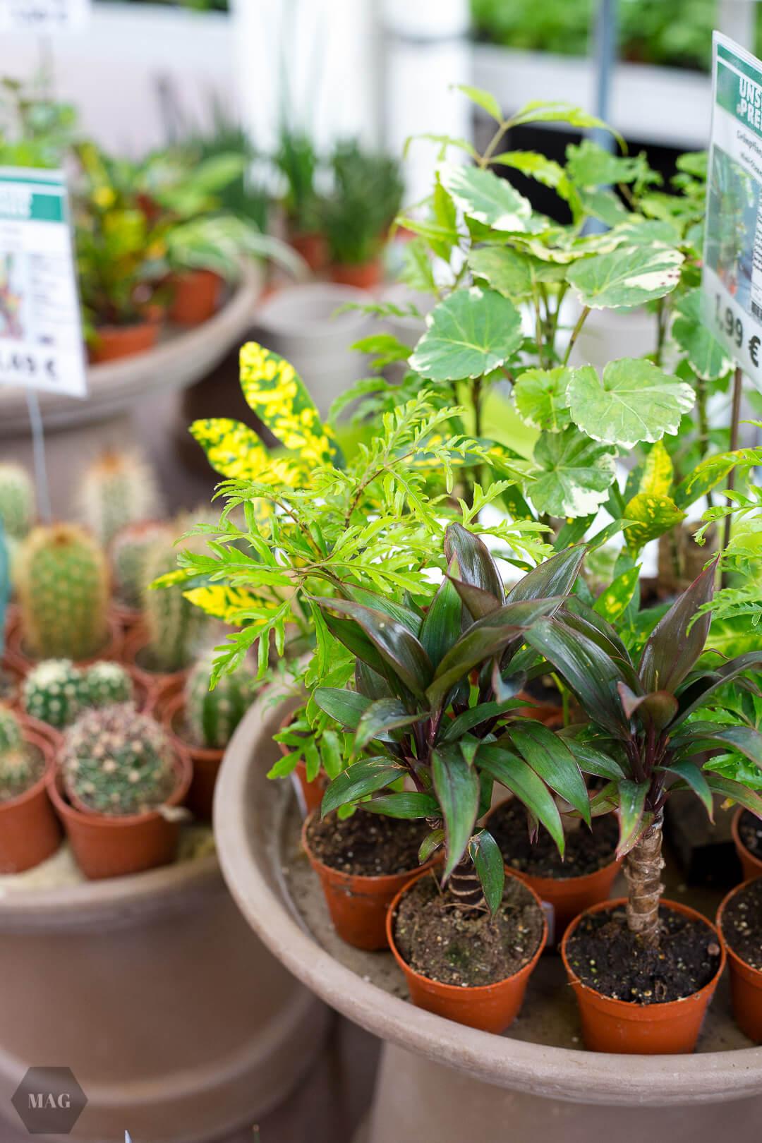 urban jungle bloggers, urban jungle bloggers buch, wohnen in grün, wohnen in grün buch, rezension urban jungle bloggers, wohnen in grün dekorieren und stylen mit pflanzen, wohnen in grün callwey verlag