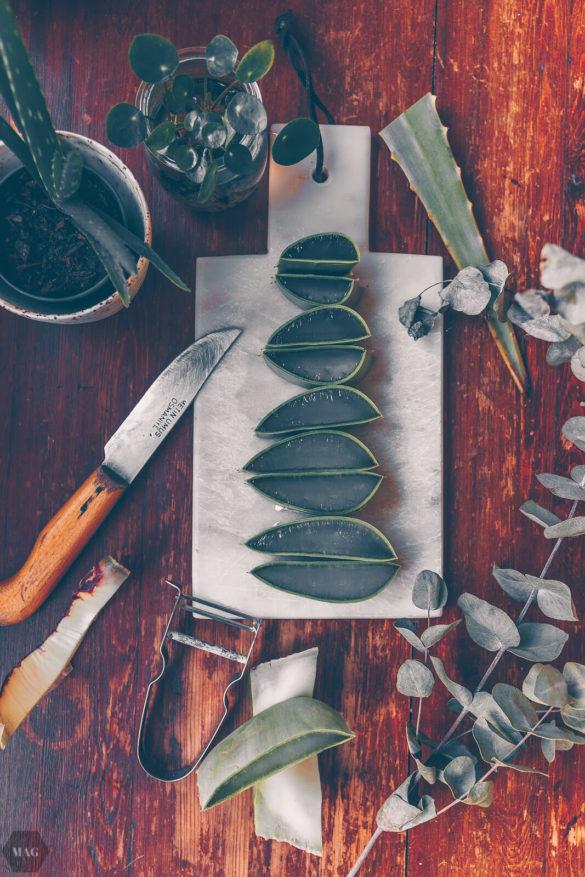 Aloe Vera, aloe vera, aloe vera gel, aloe vera diy kostmetik, diy naturkosmetik, diy kosmetik, kosmetik selber machen, Selbermachen Naturkosmetik, aloe vera gel selber machen, aloe vera gel wie verarbeiten
