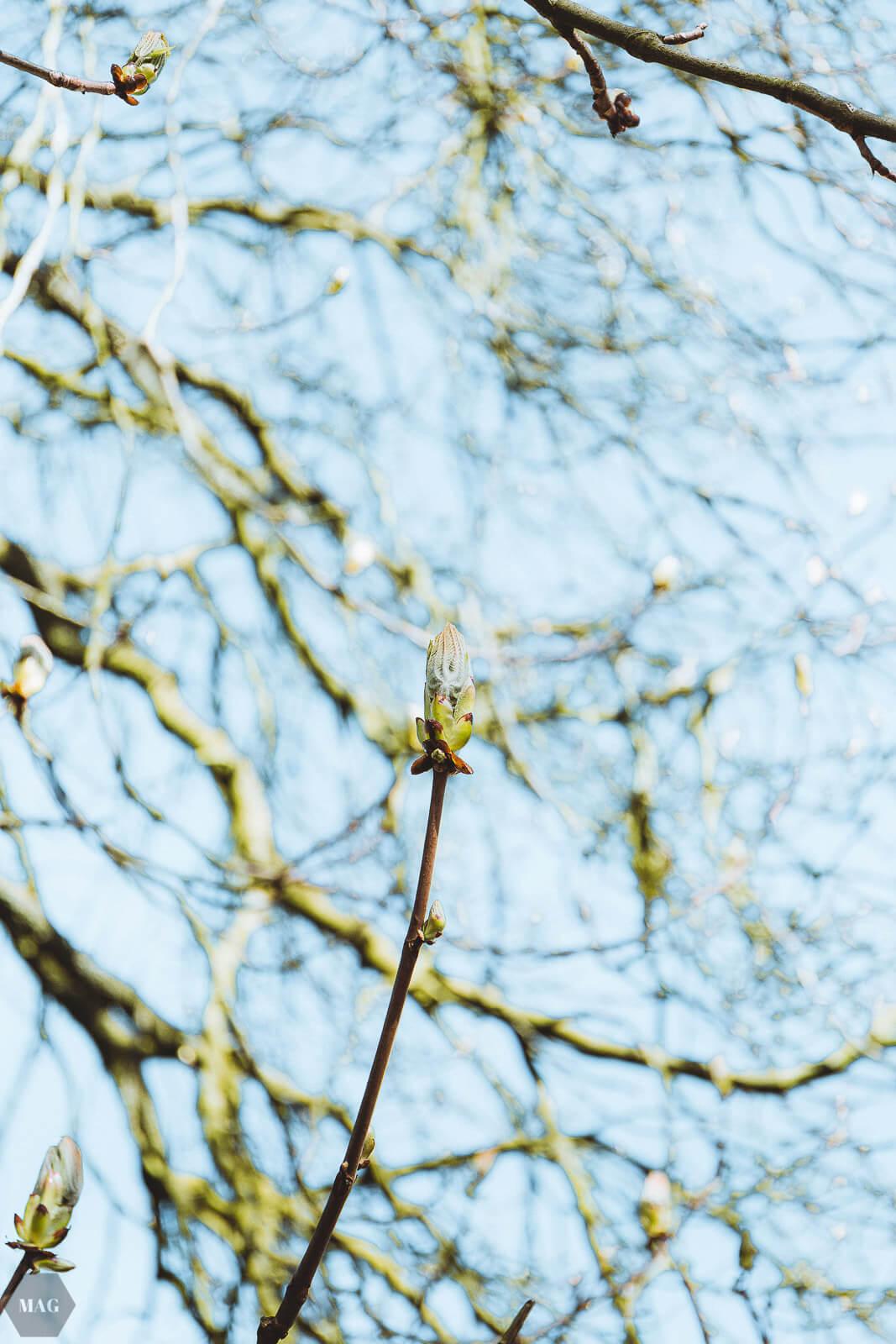 aussterben von arten, Frühling, Kirschblüten, Blumen, nachhaltig, nachhaltiger blog, Evolution und das aussterben von arten, aussterben von arten, Frühlingsgedanken, Frühlingsgefühle, Frühlingsblumen