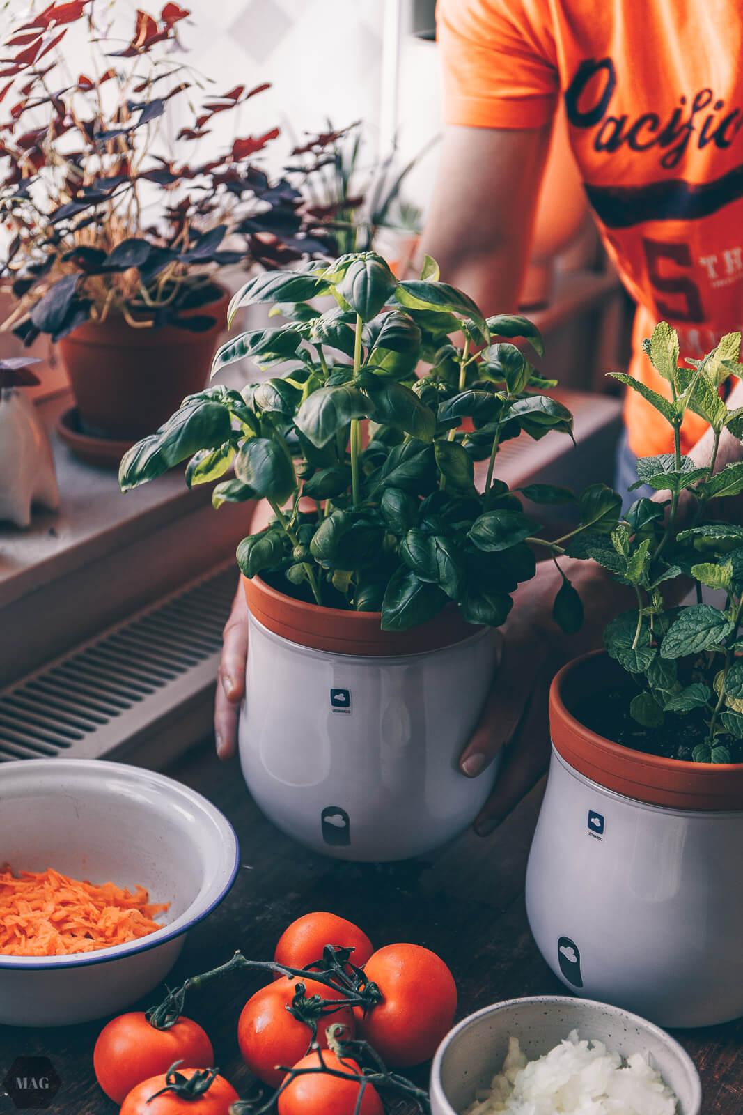 einfachste Tomatensuppe der Welt, Tomatensuppe, Tomatensuppe vegan, Tomatensuppe vegan Rezept, Tomatensuppe einfach Rezept, Tomatensuppe selbst gemacht, Tomatensuppe italienisch, Tomatensuppe gesund Rezept, Tomatensuppe vegetarisch Rezept, Tomatensuppe basilikum