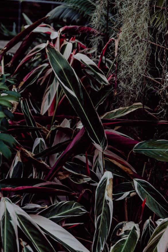 lana, Lana Italien, Lana Südtirol, Reise nach Südtirol, Reisen Südtirol vegan, Vegan Reisen, Vegan Reisen Blog, Südtirol Bio Hotel, Bio Hotel, Bio Reisen Italien, Reisen Italien Blog, Reisen Italien Erfahrungen, Reisen Südtirol Erfahrungen, Bozen Italien Blog