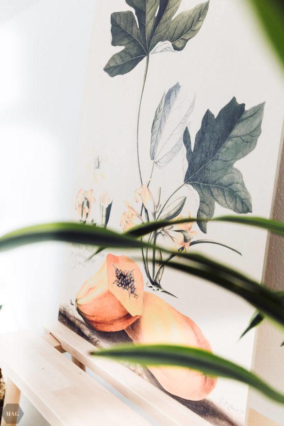 https://www.posterlounge.de/papaya-pr662604.html