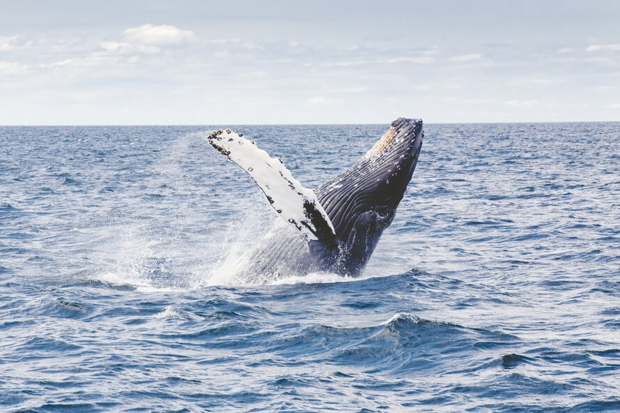 Objekt Meeressäuger: Wale & Delphine